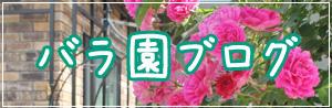 バラ園ブログのコピー